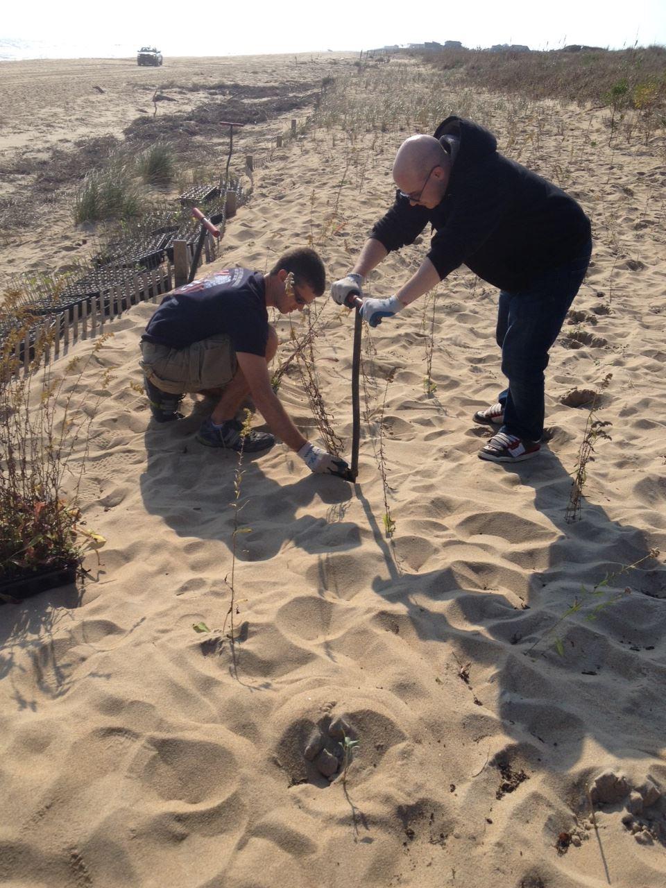 Community volunteers planting grasses.