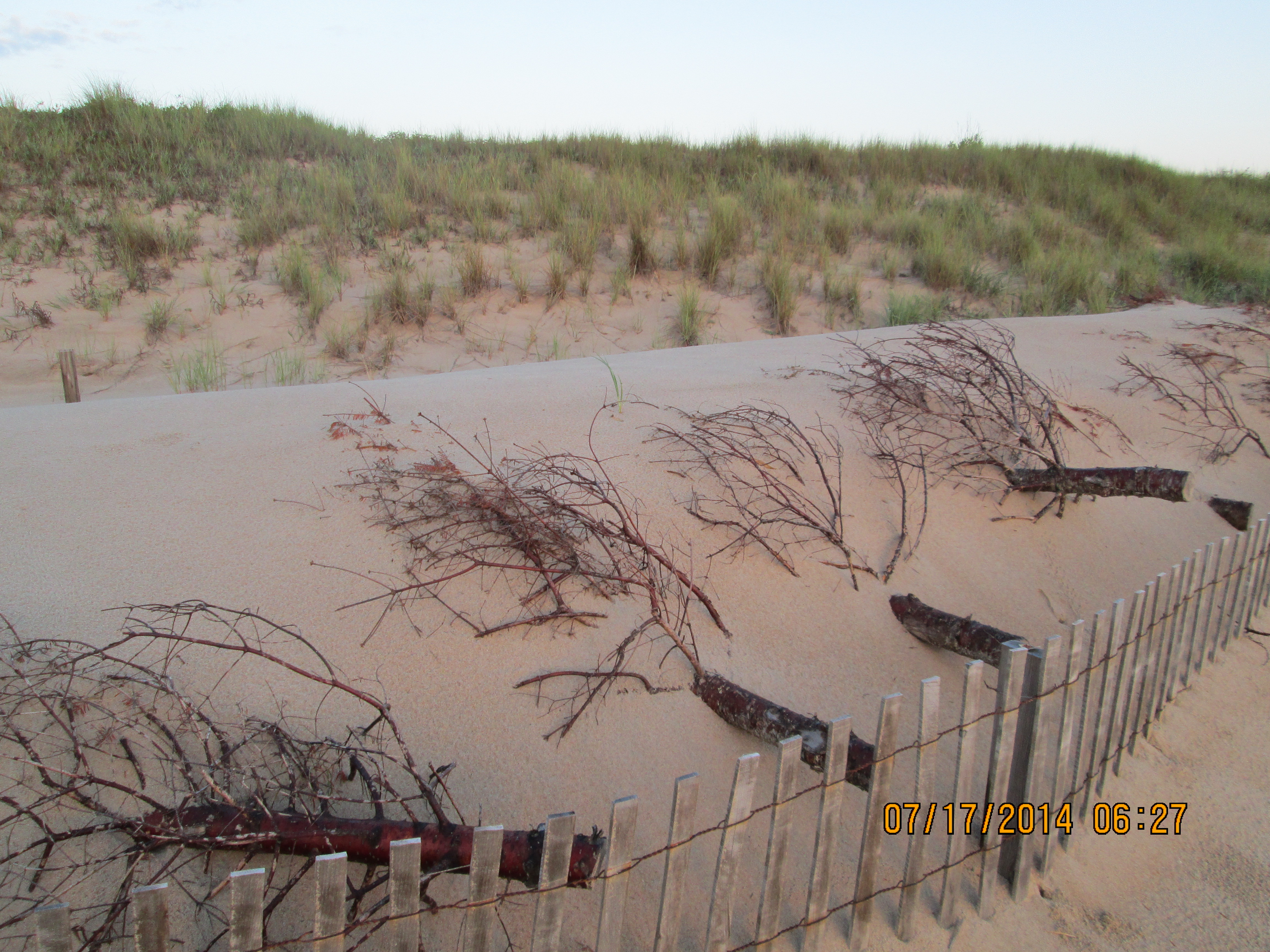 NAS Oceana Sand Dune Restoration planting